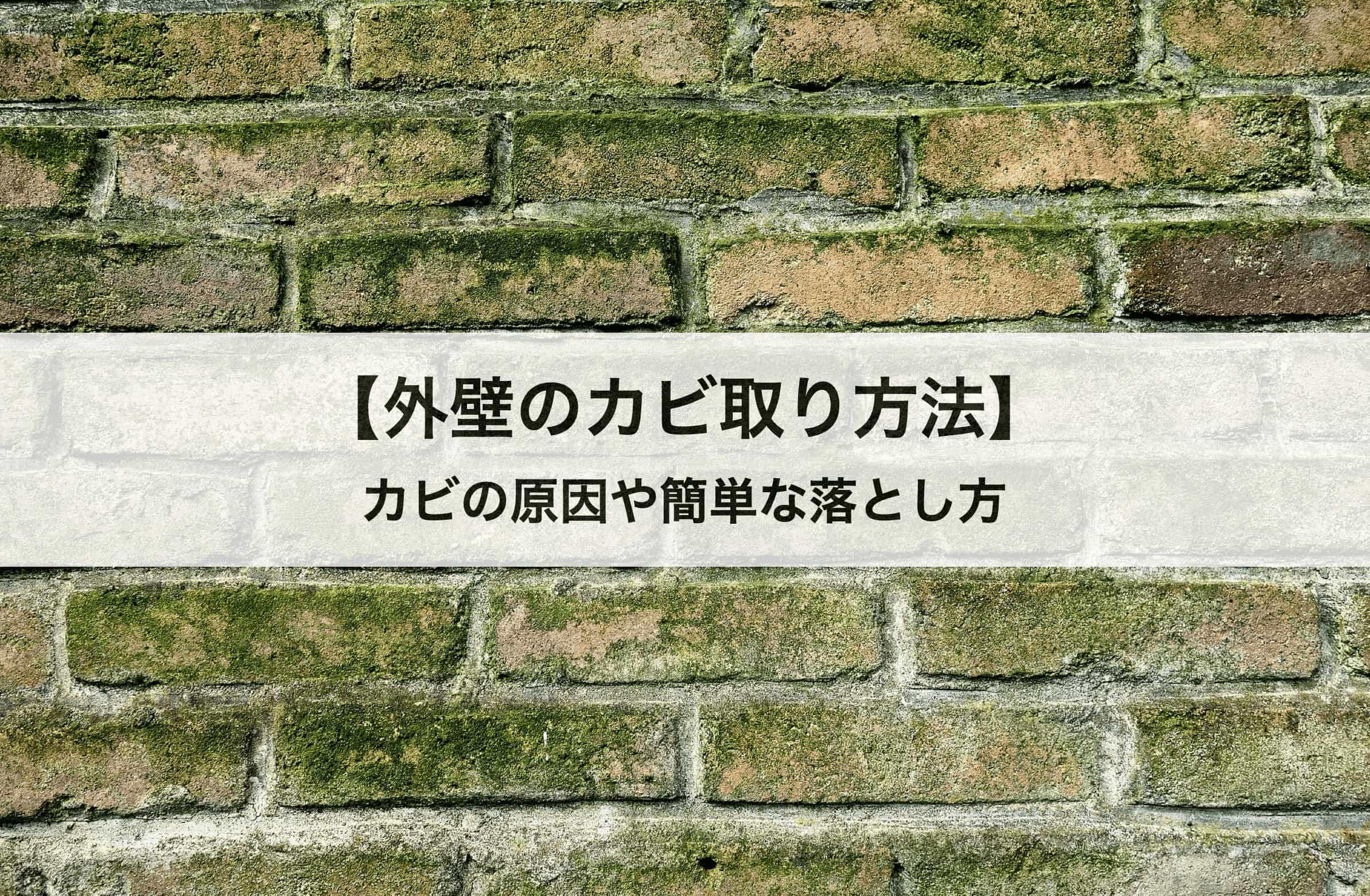 外壁のカビ取り方法|カビの原因や簡単な落とし方も紹介します!