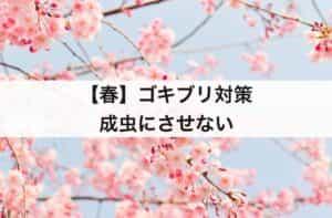 【春】ゴキブリ対策 成虫にさせない