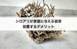 シロアリが家屋に与える被害|放置するデメリット
