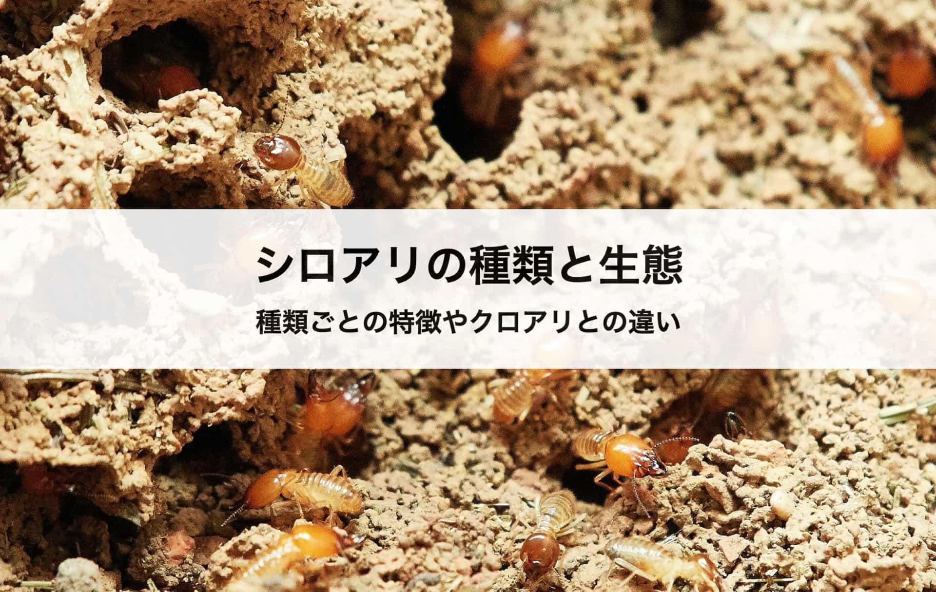 シロアリの種類と生態を徹底解説|種類ごとの特徴やクロアリとの違いについても紹介!