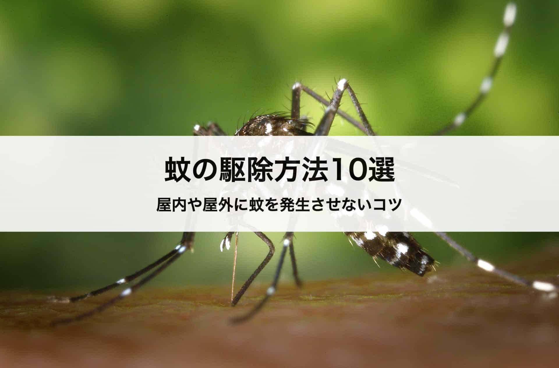 蚊の駆除方法&退治方法10選|屋内や屋外に蚊を発生させないコツとは?