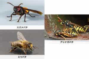 【種類別】の蜂の特徴|それぞれの巣の特徴についても紹介