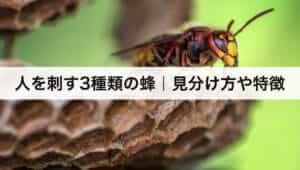 人を刺す3種類の蜂|見分け方や特徴