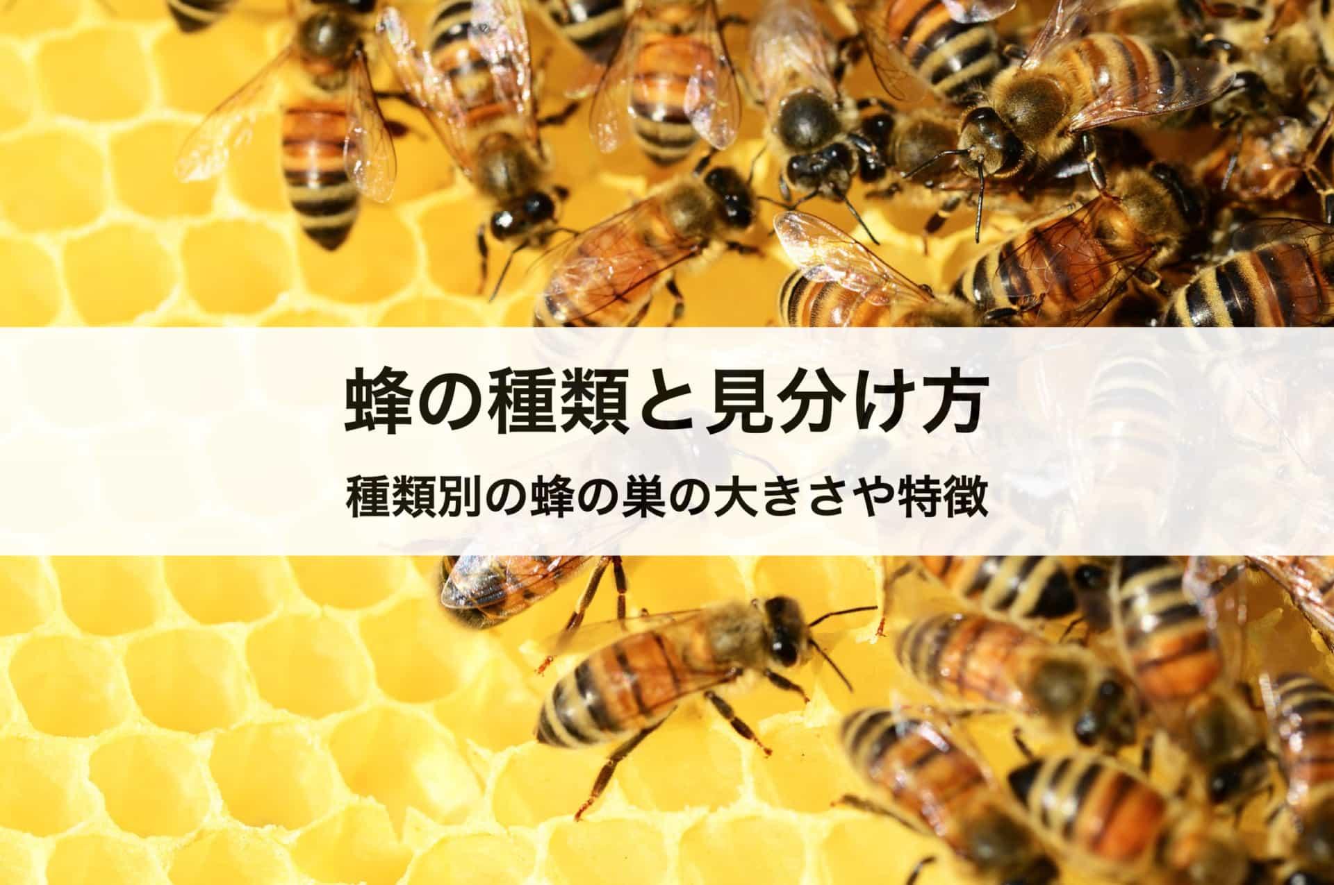 蜂の種類と見分け方|種類別の蜂の巣の大きさや特徴も解説します!