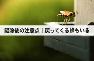 駆除後の注意点|戻ってくる蜂もいる