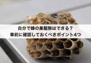 自分で蜂の巣駆除はできる?事前に確認しておくべきポイント4つ
