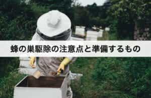 蜂の巣駆除の注意点と準備するもの