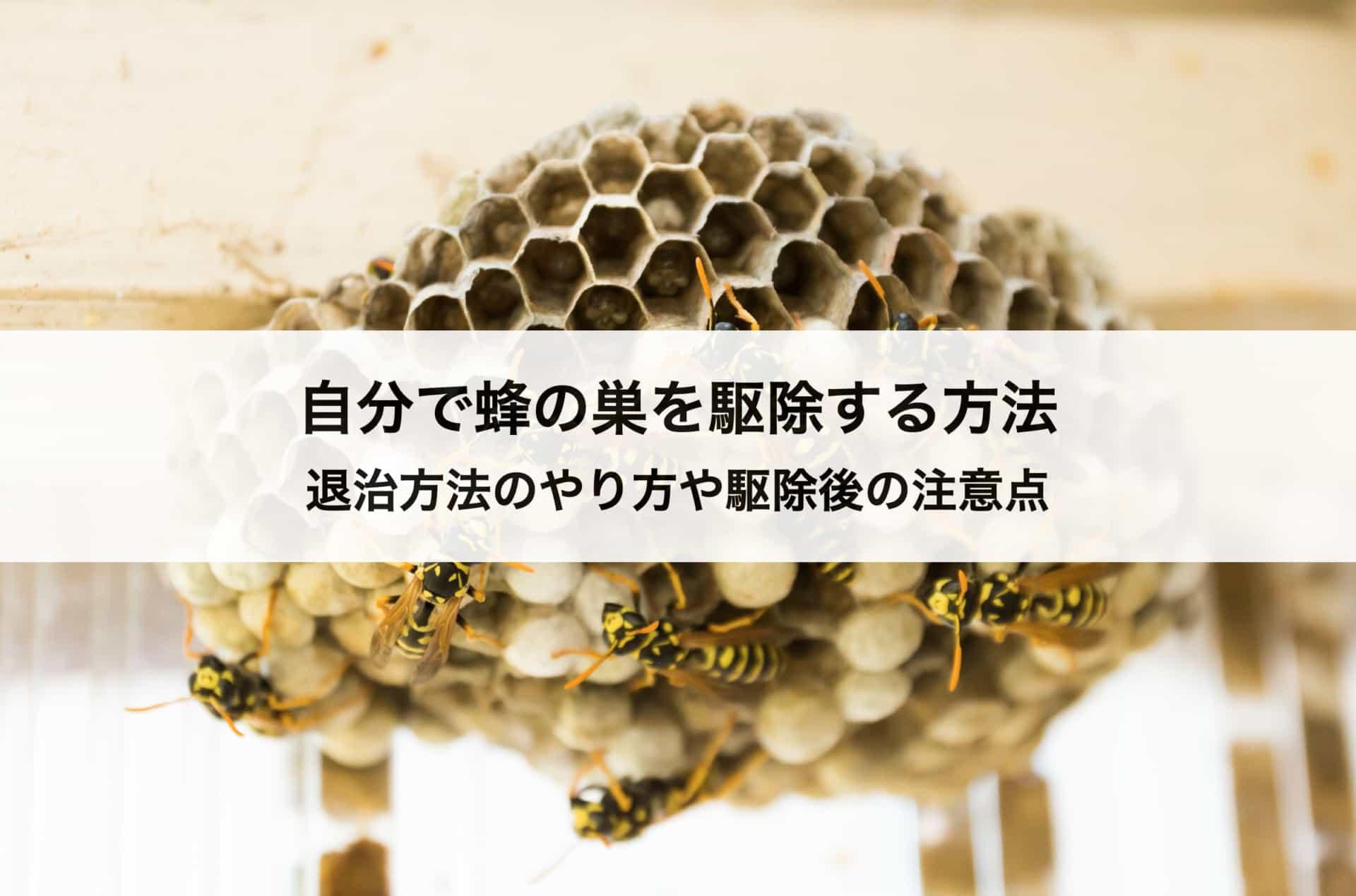 自分で蜂の巣を駆除する方法|退治方法のやり方や駆除後の注意点も解説します!