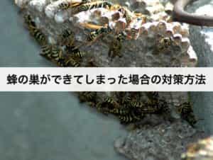 蜂の巣ができてしまった場合の対策方法