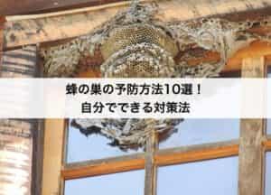 蜂の巣の予防方法10選!自分でできる対策法