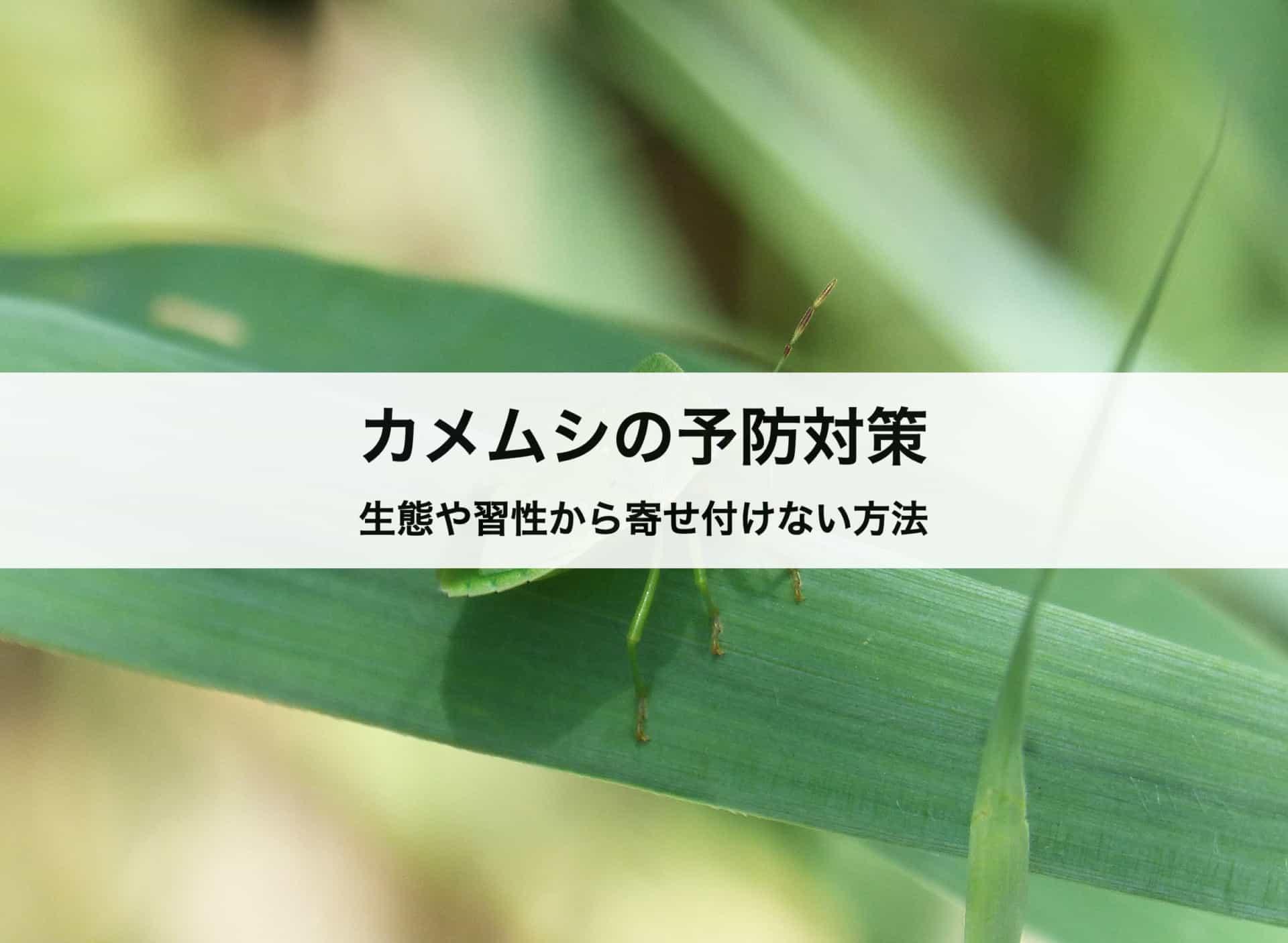 カメムシの予防対策|カメムシを生態や習性から寄せ付けない方法を紹介します!