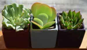 予防対策④ 観葉植物