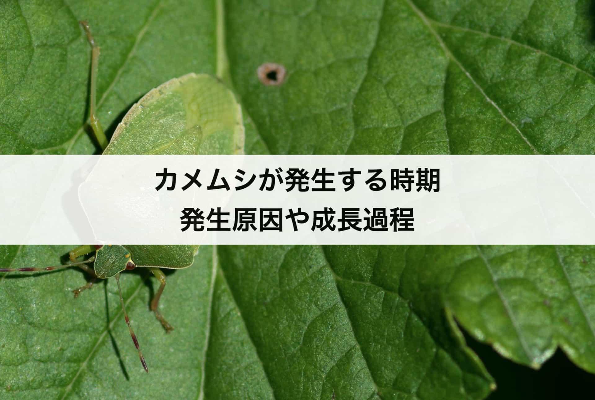 カメムシが発生する時期や季節|カメムシの発生原因や成長過程についても解説!