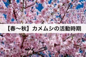 【春〜秋】がカメムシの活動時期
