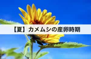 【夏】はカメムシの産卵時期