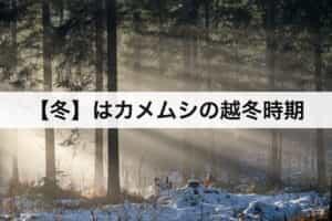 【冬】はカメムシの越冬時期