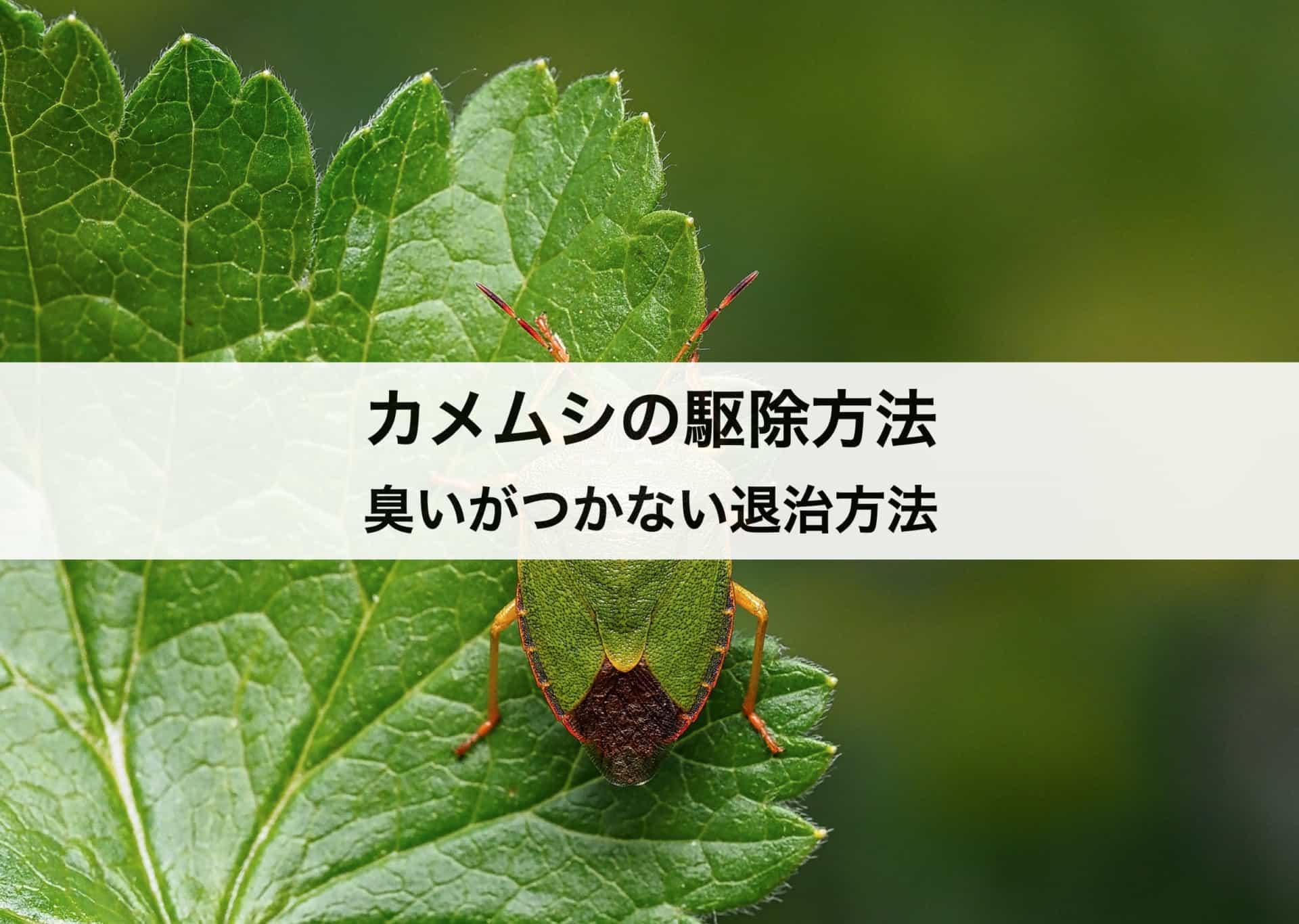 カメムシの駆除方法 カメムシの生態や臭いがつかない退治方法も紹介します!