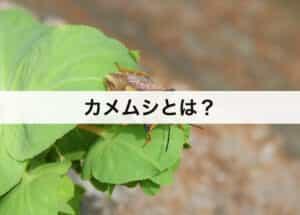 カメムシとは?種類や生態についても解説