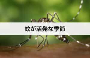 蚊が活発な季節 蚊はいつからいつまで活動している?