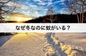 なぜ冬なのに蚊がいる?種類別に冬の活動を解説します。
