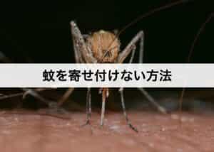蚊を寄せ付けない方法 家で簡単にできる蚊対策とは?