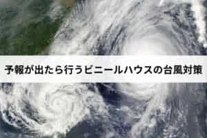 予報が出たら行うビニールハウス(パイプハウス)の台風対策
