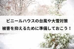 ビニールハウスの台風や大雪対策|被害を抑えるために準備しておこう!